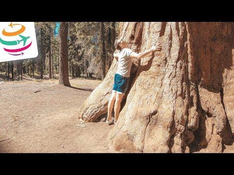Besuch bei den Riesenbäumen, Sequoia National Park | YourTravel.TV