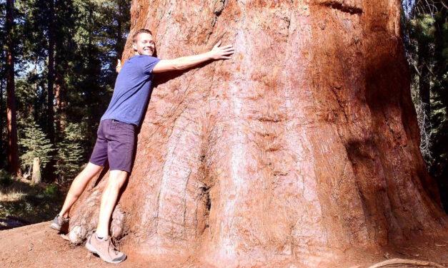 Sequoia National Park erleben