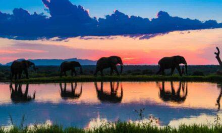 Wilde Elefanten, hautnah im Luxus Camp in Südafrika