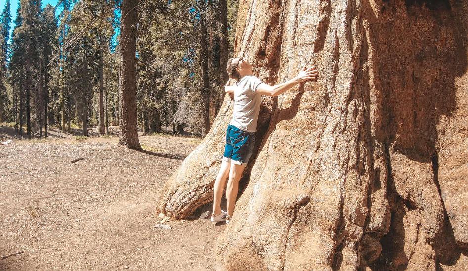 Besuch bei den Riesenbäumen, Sequoia National Park